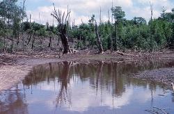 Caño Caiman