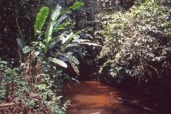 Biotop med meget brun vand