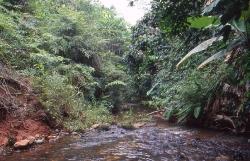 Biotop med stenet bund