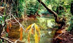 Aqua suscio ved Campo Alegre