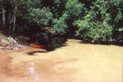 Hvidvandsflod