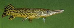 Diverse fisk.  Copyright F. Ingemann Hansen