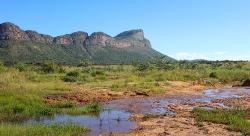 Parti fra Savannen i Entabeni Sydafrika