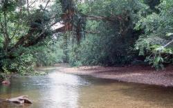 Quebrada Montanita