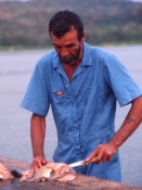 Her filetereres Oskar og Cichla som er udsat i Panama Kanalen