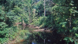 sortvand flod